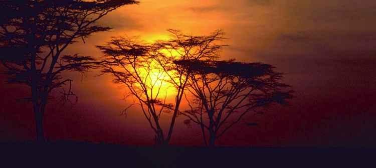 Africa limos