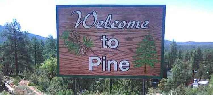Pine limos