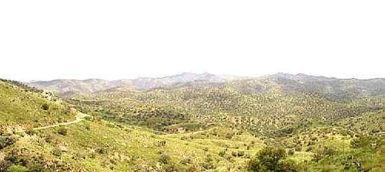 Santa Cruz limos